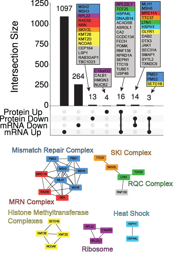 Multiple protein complexes show altered expression in MSI cell lines