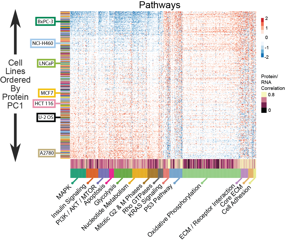 Global correlation of protein expression between pathway members is the primary variance in the solid lineages